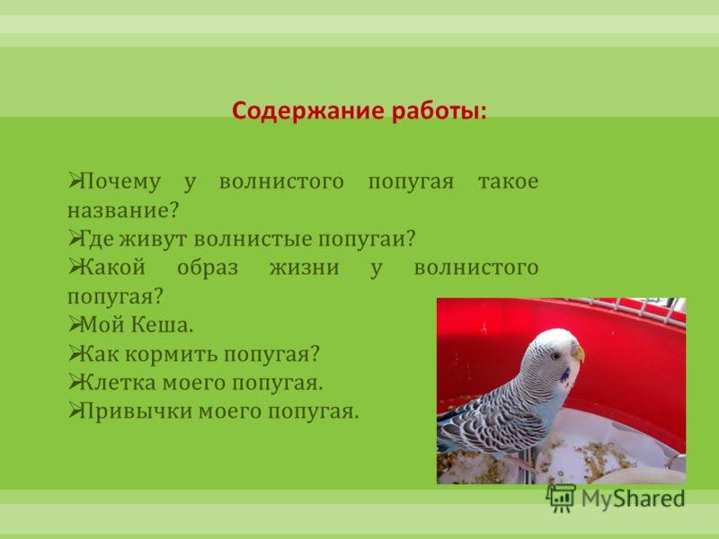 Почему у волнистого попугая такое название? Где живут волнистые попугаи? Какой образ жизни у волнистого попугая? Мой Кеша. Как кормить попугая? Клетка моего попугая. Привычки моего попугая.