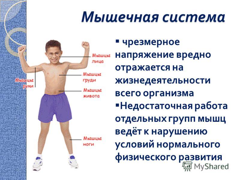Мышечная система чрезмерное напряжение вредно отражается на жизнедеятельности всего организма Недостаточная работа отдельных групп мышц ведёт к нарушению условий нормального физического развития