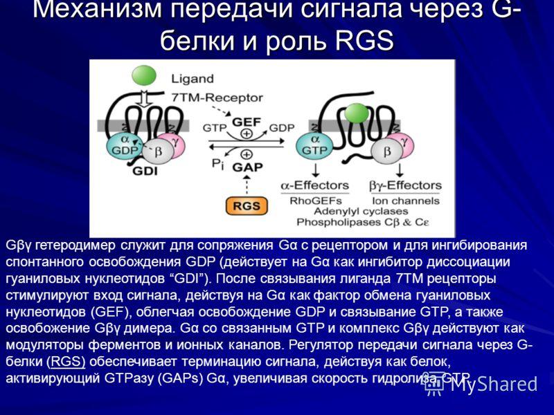 Механизм передачи сигнала через G- белки и роль RGS Gβγ гетеродимер служит для сопряжения Gα с рецептором и для ингибирования спонтанного освобождения GDP (действует на Gα как ингибитор диссоциации гуаниловых нуклеотидов GDI). После связывания лиганд