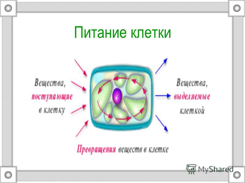 Движение цитоплазмы