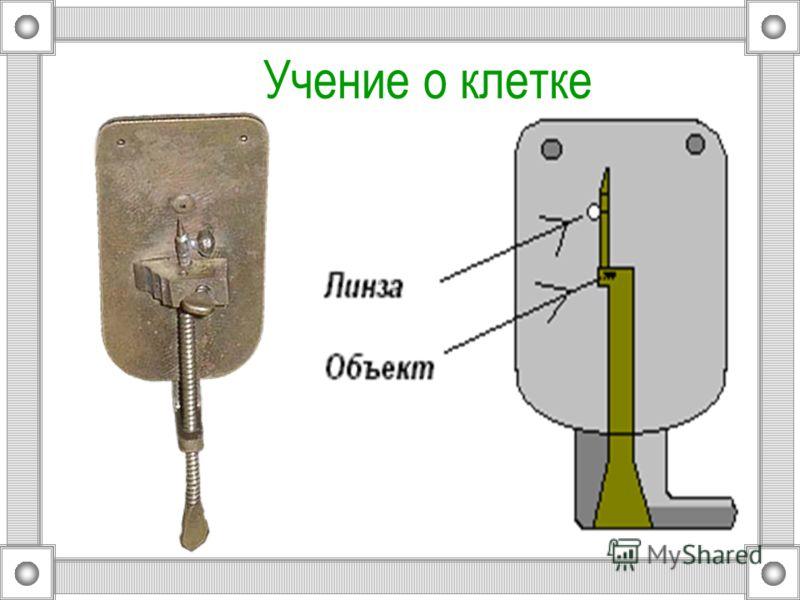 Открытие микроскопа Микроскоп Левенгука