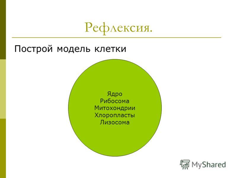 Рефлексия. Построй модель клетки Ядро Рибосома Митохондрии Хлоропласты Лизосома