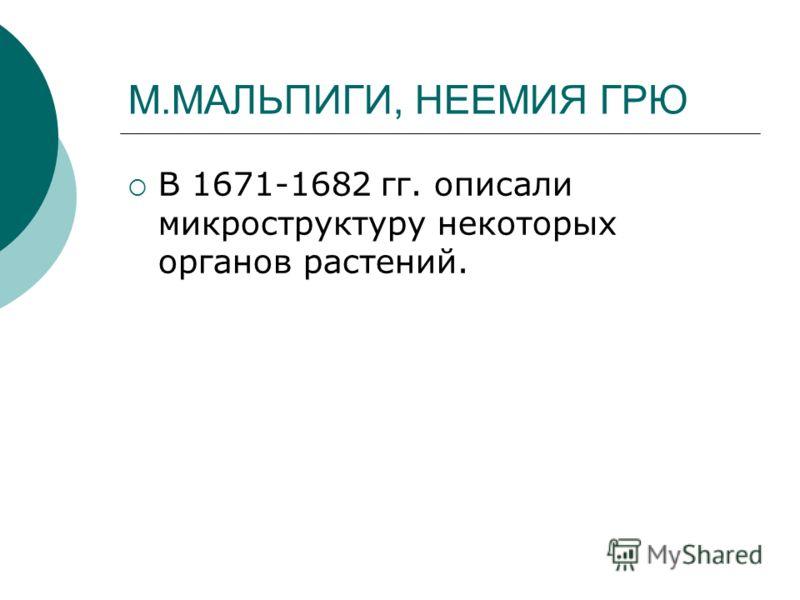 М.МАЛЬПИГИ, НЕЕМИЯ ГРЮ В 1671-1682 гг. описали микроструктуру некоторых органов растений.