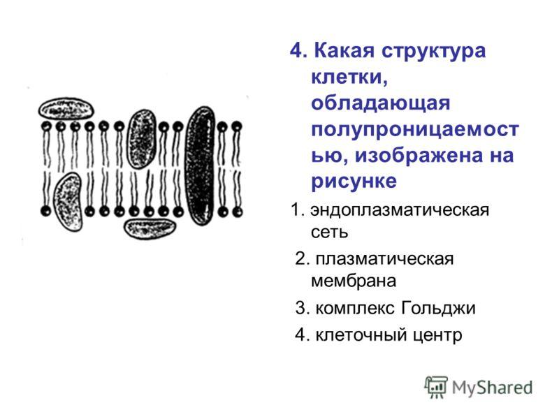 4. Какая структура клетки, обладающая полупроницаемост ью, изображена на рисунке 1. эндоплазматическая сеть 2. плазматическая мембрана 3. комплекс Гольджи 4. клеточный центр