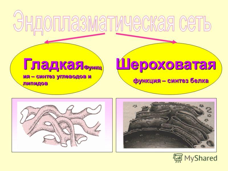 Гладкая Функц ия – синтез углеводов и липидов Шероховатая функция – синтез белка функция – синтез белка