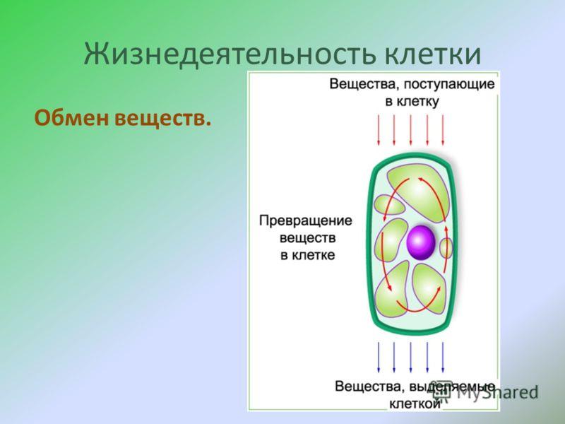 Жизнедеятельность клетки Обмен веществ.
