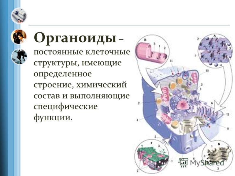 Органоиды – постоянные клеточные структуры, имеющие определенное строение, химический состав и выполняющие специфические функции.