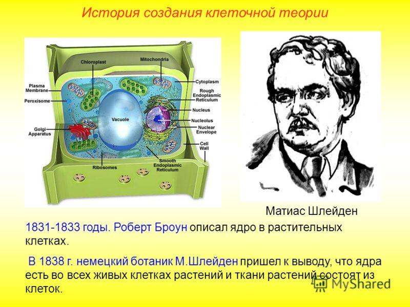 Матиас Шлейден 1831-1833 годы. Роберт Броун описал ядро в растительных клетках. В 1838 г. немецкий ботаник М.Шлейден пришел к выводу, что ядра есть во всех живых клетках растений и ткани растений состоят из клеток. История создания клеточной теории