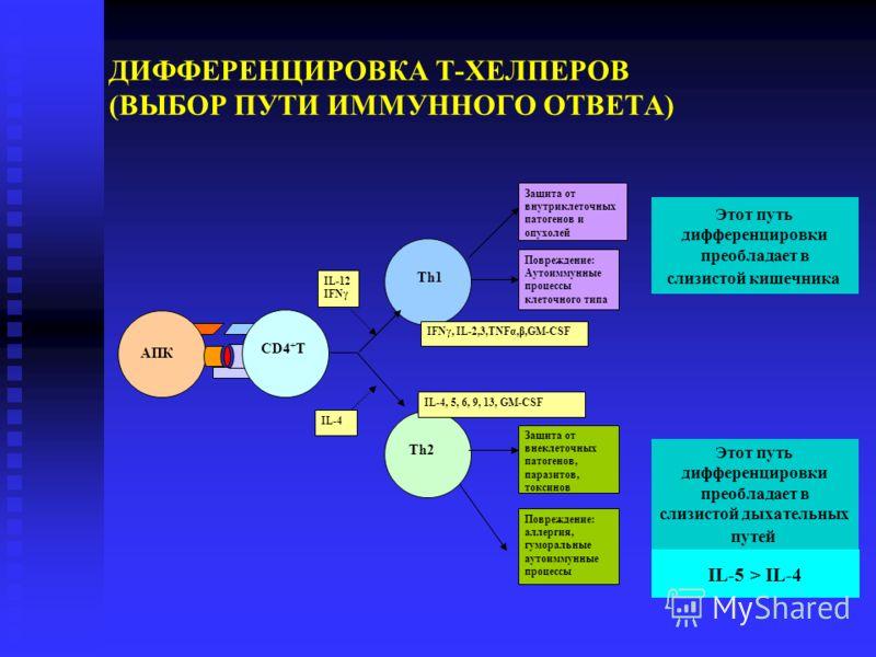 AПК Th2 CD4 + T Th1 Повреждение: Аутоиммунные процессы клеточного типа Защита от внутриклеточных патогенов и опухолей Защита от внеклеточных патогенов, паразитов, токсинов Повреждение: аллергия, гуморальные аутоиммунные процессы IL-12 IFNγ IL-4 IFNγ,