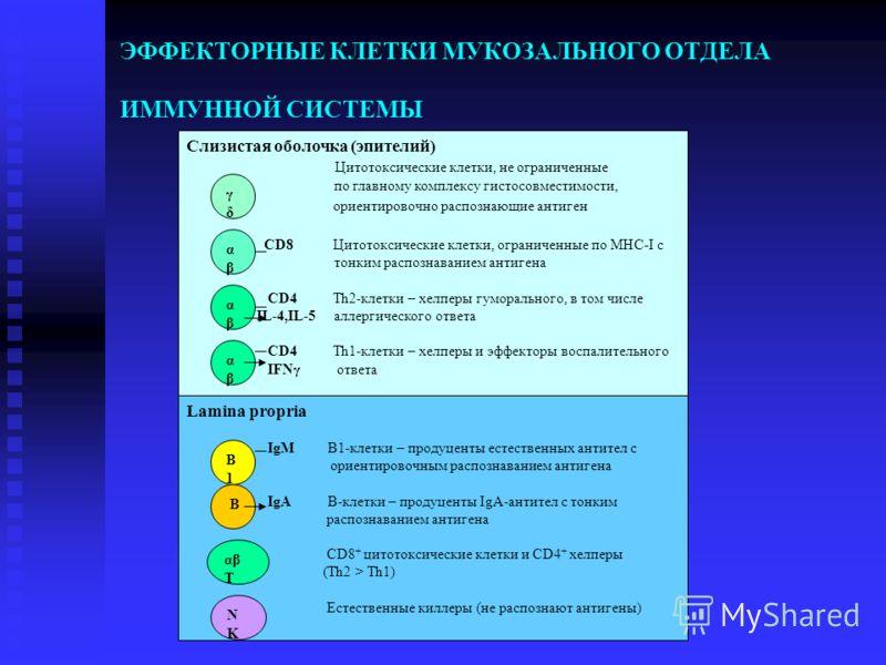Слизистая оболочка (эпителий) Цитотоксические клетки, не ограниченные по главному комплексу гистосовместимости, ориентировочно распознающие антиген CD8 Цитотоксические клетки, ограниченные по МНС-I с тонким распознаванием антигена CD4 Тh2-клетки – хе