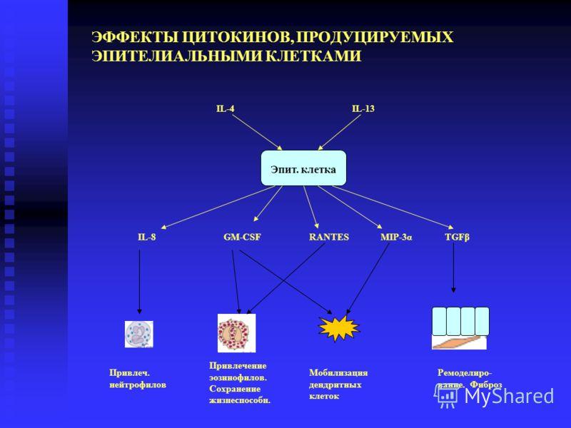 ЭФФЕКТЫ ЦИТОКИНОВ, ПРОДУЦИРУЕМЫХ ЭПИТЕЛИАЛЬНЫМИ КЛЕТКАМИ IL-8GM-CSFMIP-3αRANTES Привлечение эозинофилов. Сохранение жизнеспособн. Ремоделиро- вание. Фиброз TGFβ IL-4IL-13 Привлеч. нейтрофилов Мобилизация дендритных клеток Эпит. клетка