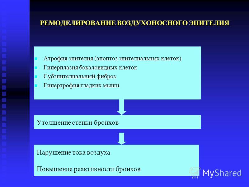 РЕМОДЕЛИРОВАНИЕ ВОЗДУХОНОСНОГО ЭПИТЕЛИЯ Атрофия эпителия (апоптоз эпителиальных клеток) Атрофия эпителия (апоптоз эпителиальных клеток) Гиперплазия бокаловидных клеток Гиперплазия бокаловидных клеток Субэпителиальный фиброз Субэпителиальный фиброз Ги