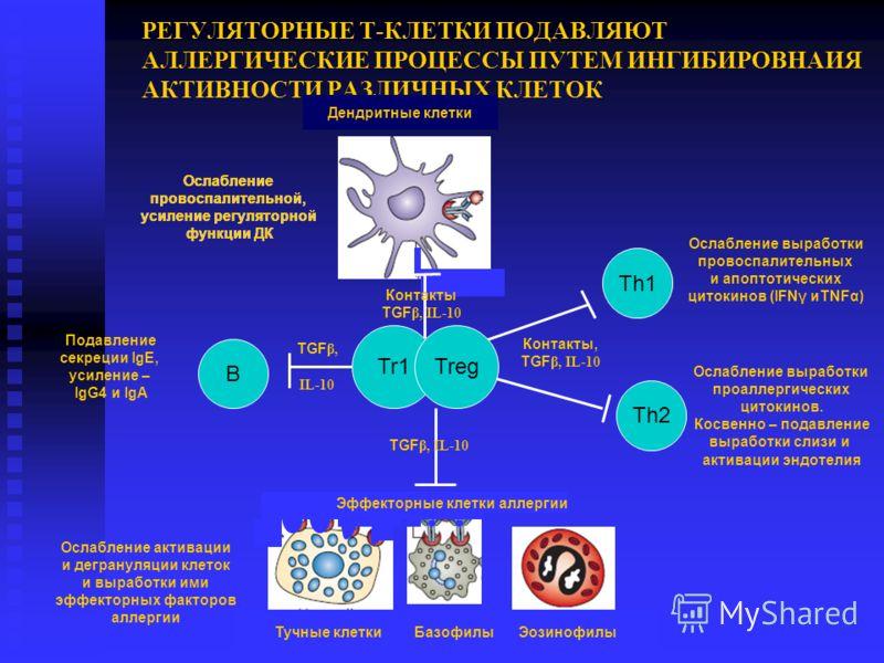 РЕГУЛЯТОРНЫЕ Т-КЛЕТКИ ПОДАВЛЯЮТ АЛЛЕРГИЧЕСКИЕ ПРОЦЕССЫ ПУТЕМ ИНГИБИРОВНАИЯ АКТИВНОСТИ РАЗЛИЧНЫХ КЛЕТОК Th1 Th2 B Тучные клетки Базофилы Эозинофилы Дендритные клетки Ослабление провоспалительной, усиление регуляторной функции ДК Ослабление провоспалит