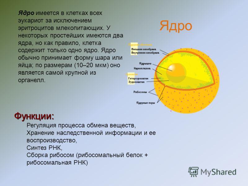 Состав и строение наружной плазматической мембраны Интегральный белок холестерол фосфолипиды Наружный белок Олигосахаридная боковая цепь