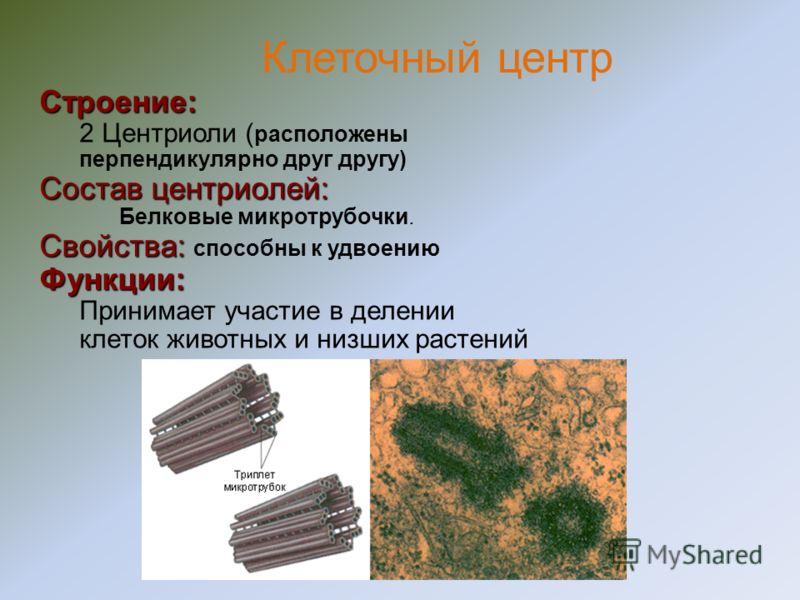 Строение: Малая БольшаяСостав: РНК (рибосомная) Белки.Функции: Обеспечивает биосинтез белка (сборку белковой молекулы из аминокислот). Немембранные органеллы. Рибосомы