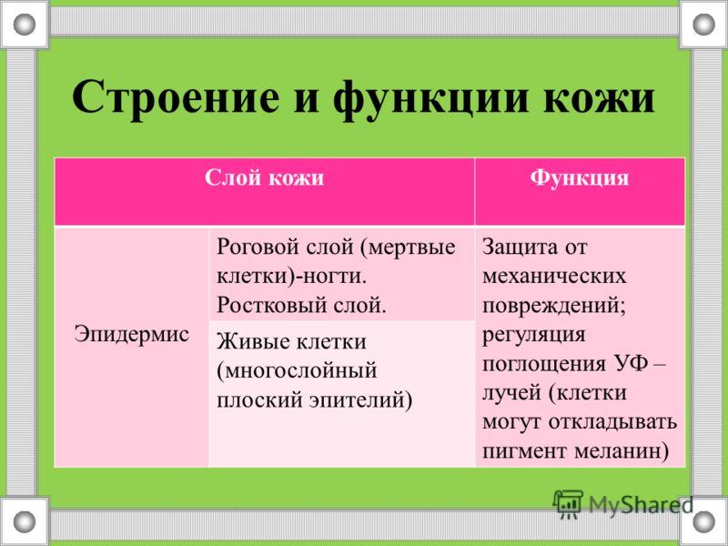 Узнай предмет Шарик Винтик Шуруп Гвоздь