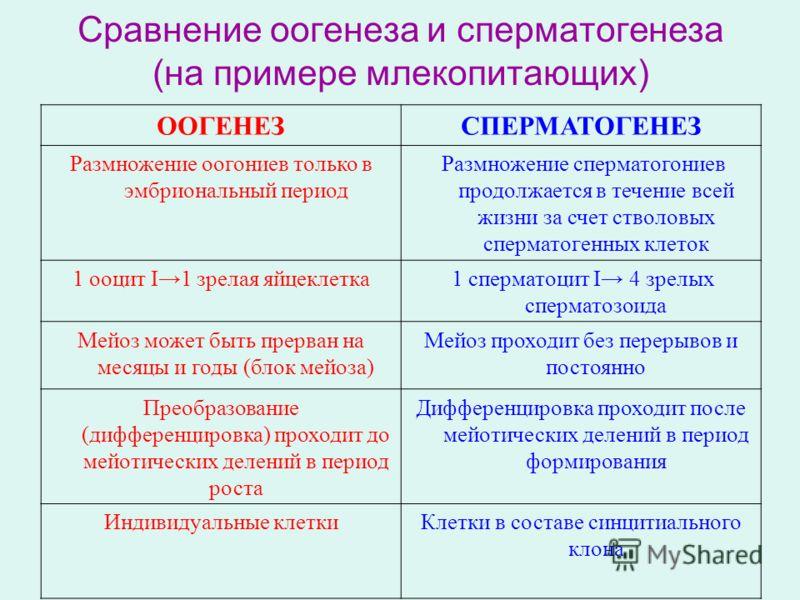 Сравнение оогенеза и сперматогенеза (на примере млекопитающих) ООГЕНЕЗСПЕРМАТОГЕНЕЗ Размножение оогониев только в эмбриональный период Размножение сперматогониев продолжается в течение всей жизни за счет стволовых сперматогенных клеток 1 ооцит I1 зре