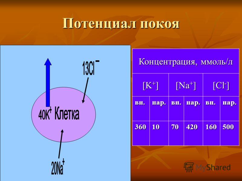 Потенциал покоя Концентрация, ммоль/л [K + ] [Na + ] [Cl - ] вн.нар.вн.нар.вн.нар. 3601070420160500