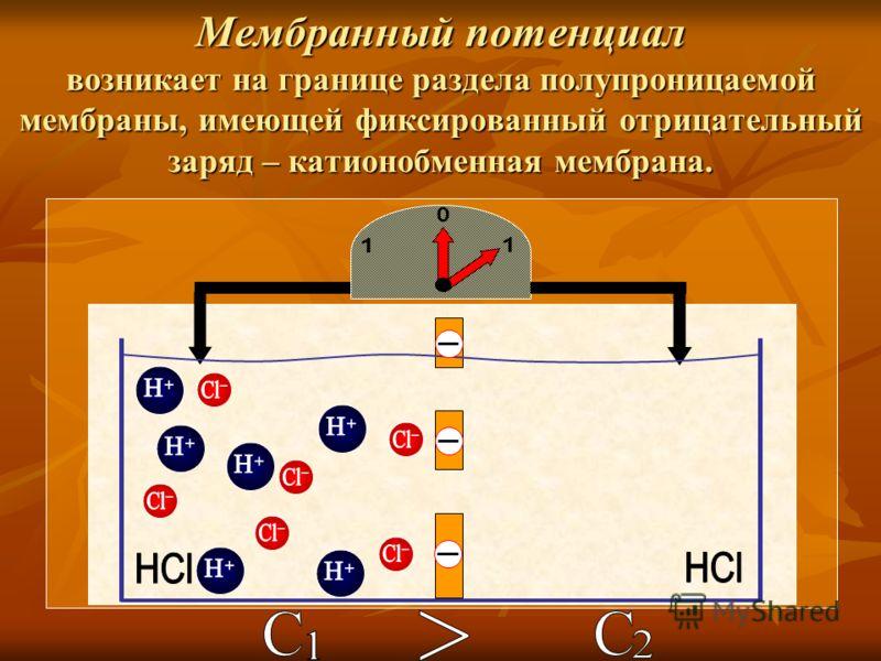 Мембранный потенциал возникает на границе раздела полупроницаемой мембраны, имеющей фиксированный отрицательный заряд – катионобменная мембрана.