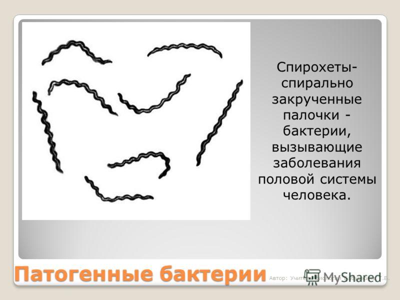 Патогенные бактерии Спирохеты- спирально закрученные палочки - бактерии, вызывающие заболевания половой системы человека. Автор: Учитель биологии Бабушкина Т.В.