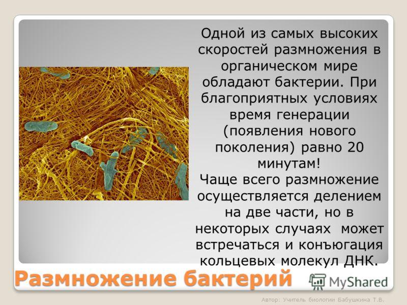 Размножение бактерий Одной из самых высоких скоростей размножения в органическом мире обладают бактерии. При благоприятных условиях время генерации (появления нового поколения) равно 20 минутам! Чаще всего размножение осуществляется делением на две ч