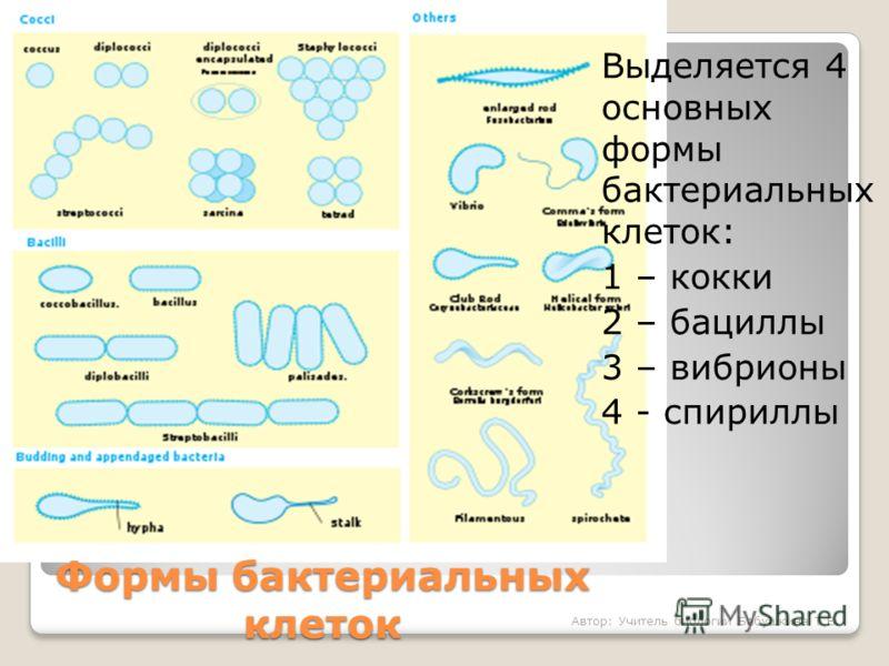 Формы бактериальных клеток Выделяется 4 основных формы бактериальных клеток: 1 – кокки 2 – бациллы 3 – вибрионы 4 - спириллы Автор: Учитель биологии Бабушкина Т.В.