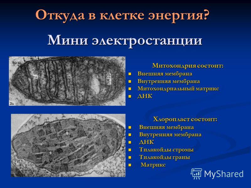 Мини электростанции Митохондрия состоит: Митохондрия состоит: Внешняя мембрана Внешняя мембрана Внутренняя мембрана Внутренняя мембрана Митохондриальный матрикс Митохондриальный матрикс ДНК ДНК Хлоропласт состоит: Хлоропласт состоит: Внешняя мембрана