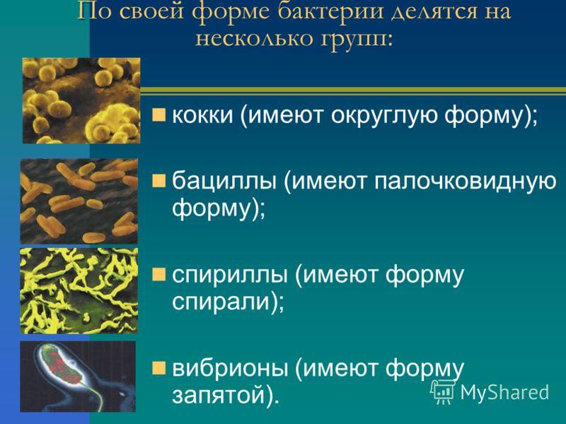 По своей форме бактерии делятся на несколько групп: кокки (имеют округлую форму); бациллы (имеют палочковидную форму); спириллы (имеют форму спирали); вибрионы (имеют форму запятой).