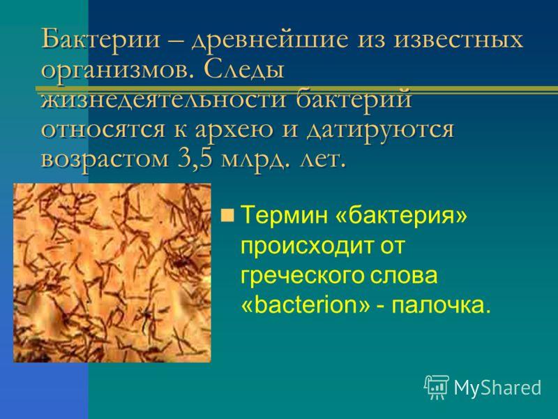 Бактерии – древнейшие из известных организмов. Следы жизнедеятельности бактерий относятся к архею и датируются возрастом 3,5 млрд. лет. Термин «бактерия» происходит от греческого слова «bacterion» - палочка.