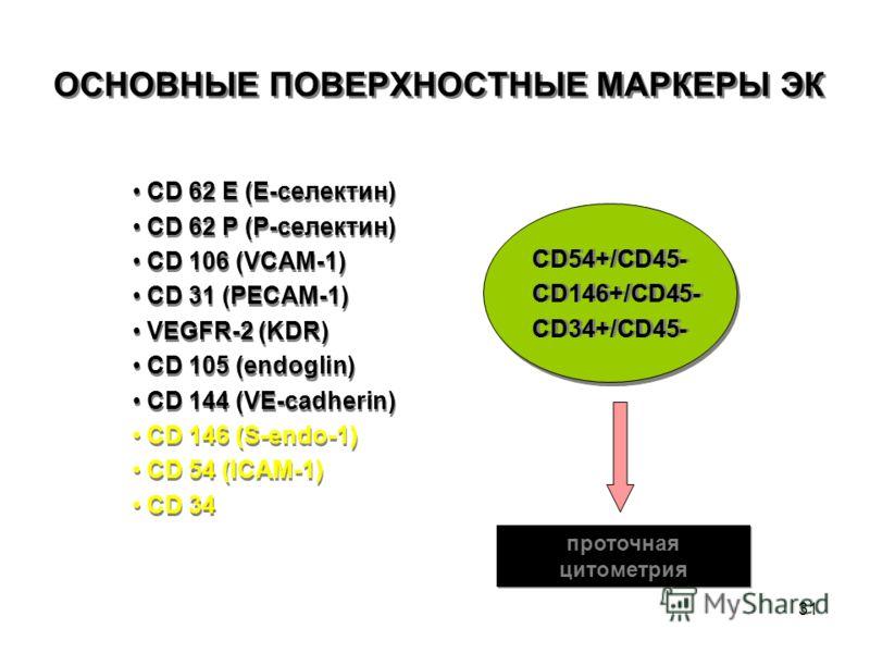 31 ОСНОВНЫЕ ПОВЕРХНОСТНЫЕ МАРКЕРЫ ЭК CD 62 E (E-селектин) CD 62 P (Р-селектин) CD 106 (VCAM-1) CD 31 (PECAM-1) VEGFR-2 (KDR) СD 105 (endoglin) CD 144 (VE-cadherin) CD 146 (S-endo-1) СD 54 (ICAM-1) CD 34 CD 62 E (E-селектин) CD 62 P (Р-селектин) CD 10