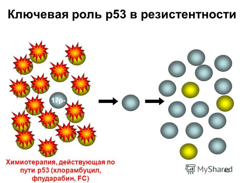 40 N Ключевая роль p53 в резистентности 17p- До лечения ПР В рецидиве Химиотерапия, действующая по пути p53 (хлорамбуцил, флударабин, FC)