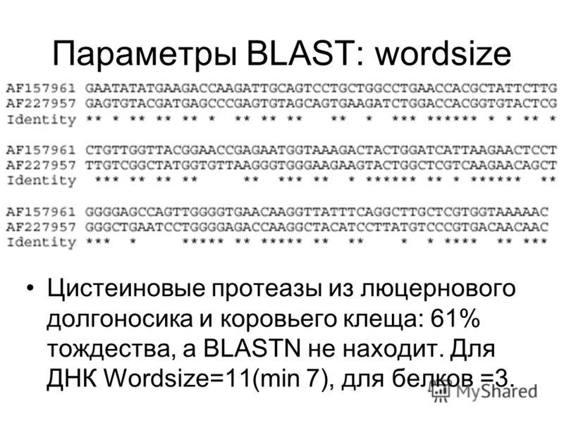 Параметры BLAST: wordsize Цистеиновые протеазы из люцернового долгоносика и коровьего клеща: 61% тождества, а BLASTN не находит. Для ДНК Wordsize=11(min 7), для белков =3.