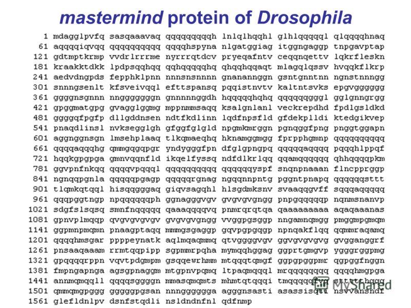 mastermind protein of Drosophila