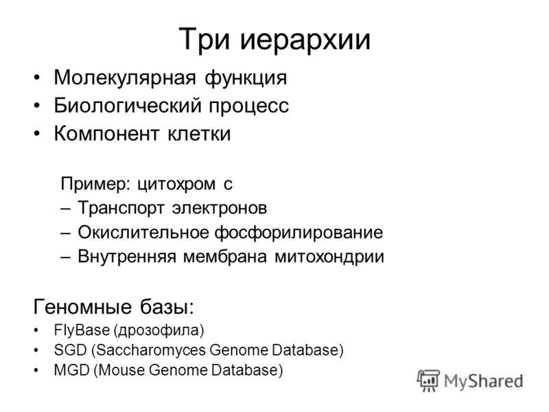 Три иерархии Молекулярная функция Биологический процесс Компонент клетки Пример: цитохром с –Транспорт электронов –Окислительное фосфорилирование –Внутренняя мембрана митохондрии Геномные базы: FlyBase (дрозофила) SGD (Saccharomyces Genome Database)