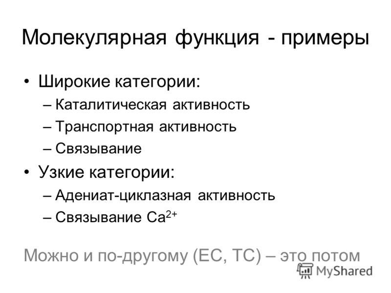 Молекулярная функция - примеры Широкие категории: –Каталитическая активность –Транспортная активность –Связывание Узкие категории: –Адениат-циклазная активность –Связывание Ca 2+ Можно и по-другому (EC, TC) – это потом