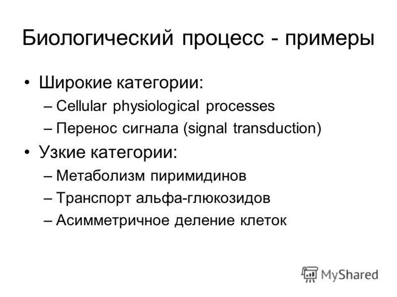 Биологический процесс - примеры Широкие категории: –Cellular physiological processes –Перенос сигнала (signal transduction) Узкие категории: –Метаболизм пиримидинов –Транспорт альфа-глюкозидов –Асимметричное деление клеток