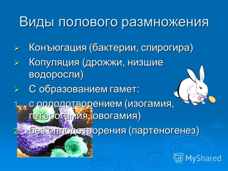 Виды полового размножения Конъюгация (бактерии, спирогира) Конъюгация (бактерии, спирогира) Копуляция (дрожжи, низшие водоросли) Копуляция (дрожжи, низшие водоросли) С образованием гамет: С образованием гамет: 1. с оплодотворением (изогамия, гетерога