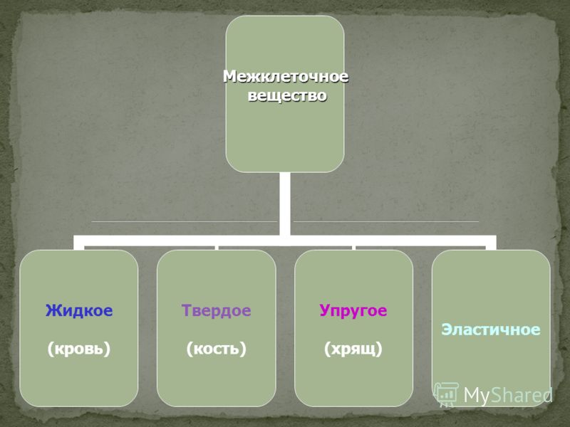 Межклеточное вещество вещество Жидкое (кровь) Твердое (кость) Упругое (хрящ) Эластичное
