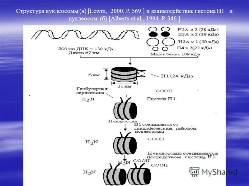 Структура нуклеосомы (а) [Lewin, 2000. Р. 569 ] и взаимодействие гистона Н1 и нуклеосом (б) [Alberts et al., 1994. Р. 346 ]