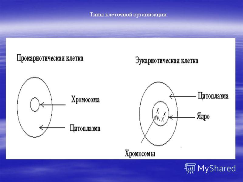 Типы клеточной организации