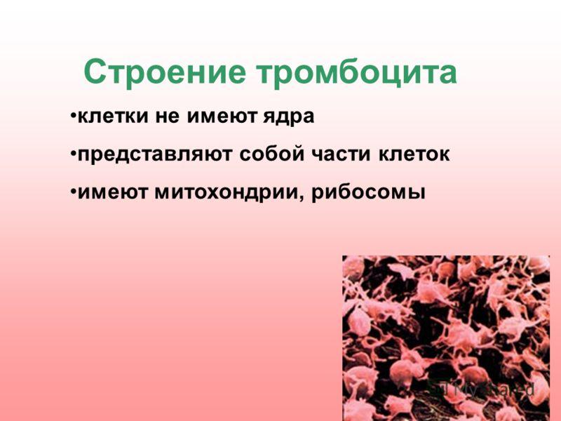 клетки не имеют ядра представляют собой части клеток имеют митохондрии, рибосомы Строение тромбоцита