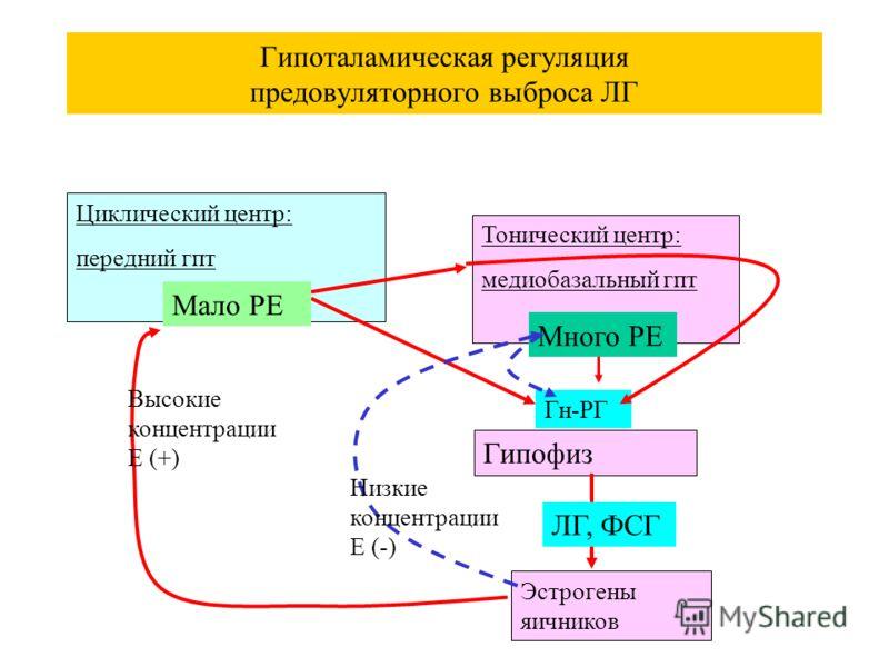 Гипоталамическая регуляция предовуляторного выброса ЛГ Циклический центр: передний гпт Тонический центр: медиобазальный гпт Гипофиз Гн-РГ Эстрогены яичников Высокие концентрации Е (+) Мало РЕ Много РЕ Низкие концентрации Е (-) ЛГ, ФСГ