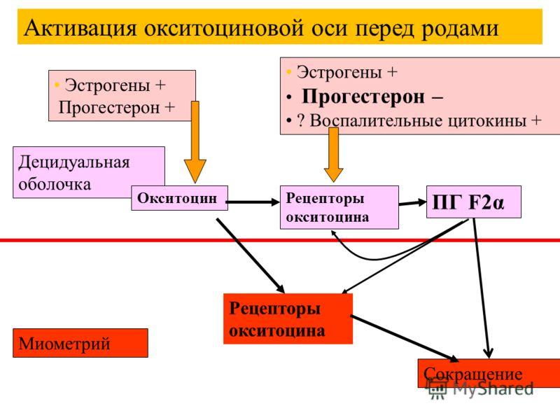 Децидуальная оболочка Миометрий ОкситоцинРецепторы окситоцина ПГ F2α Сокращение Эстрогены + Прогестерон + Эстрогены + Прогестерон – ? Воспалительные цитокины + Активация окситоциновой оси перед родами