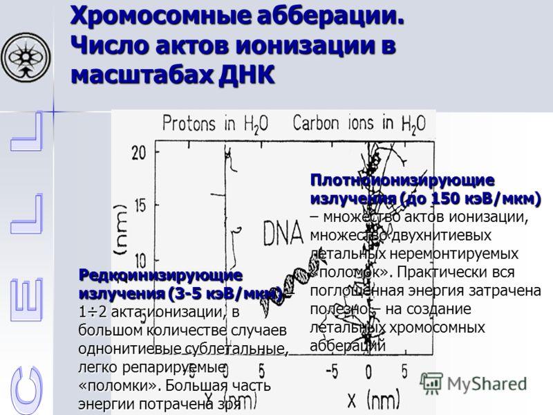 Хромосомные абберации. Число актов ионизации в масштабах ДНК Редкоинизирующие излучения (3-5 кэВ/мкм) – 1÷2 акта ионизации, в большом количестве случаев однонитиевые сублетальные, легко репарируемые «поломки». Большая часть энергии потрачена зря Плот