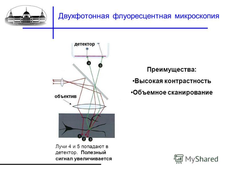 Двухфотонная флуоресцентная микроскопия Лучи 4 и 5 попадают в детектор. Полезный сигнал увеличивается Преимущества: Высокая контрастность Объемное сканирование