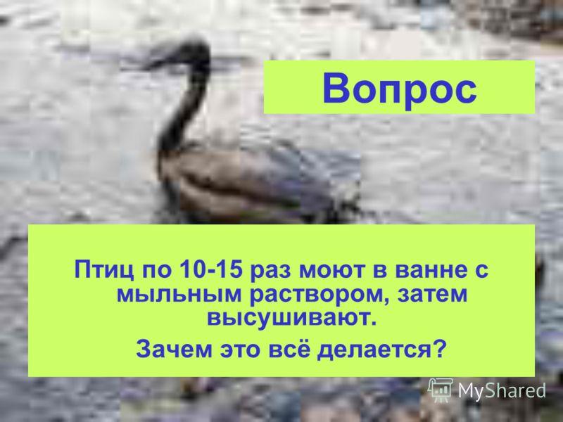 Вопрос Птиц по 10-15 раз моют в ванне с мыльным раствором, затем высушивают. Зачем это всё делается?