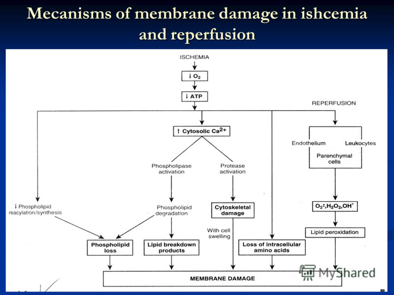 Mecanisms of membrane damage in ishcemia and reperfusion