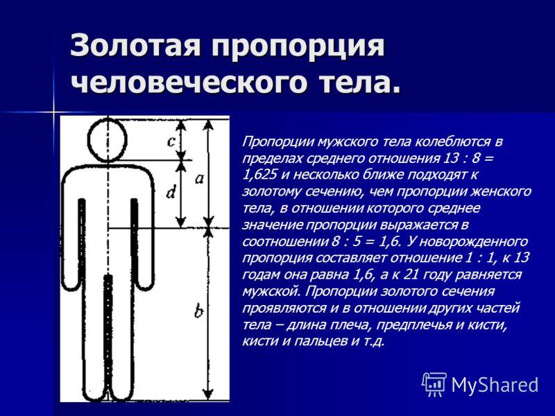 Золотая пропорция человеческого тела. Пропорции мужского тела колеблются в пределах среднего отношения 13 : 8 = 1,625 и несколько ближе подходят к золотому сечению, чем пропорции женского тела, в отношении которого среднее значение пропорции выражает