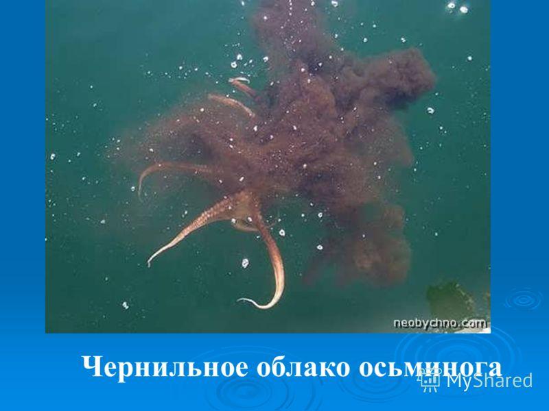 Чернильное облако осьминога
