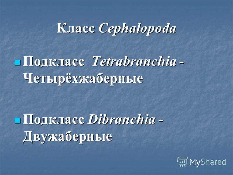 Класс Cephalopoda Подкласс Tetrabranchia - Четырёхжаберные Подкласс Tetrabranchia - Четырёхжаберные Подкласс Dibranchia - Двужаберные Подкласс Dibranchia - Двужаберные